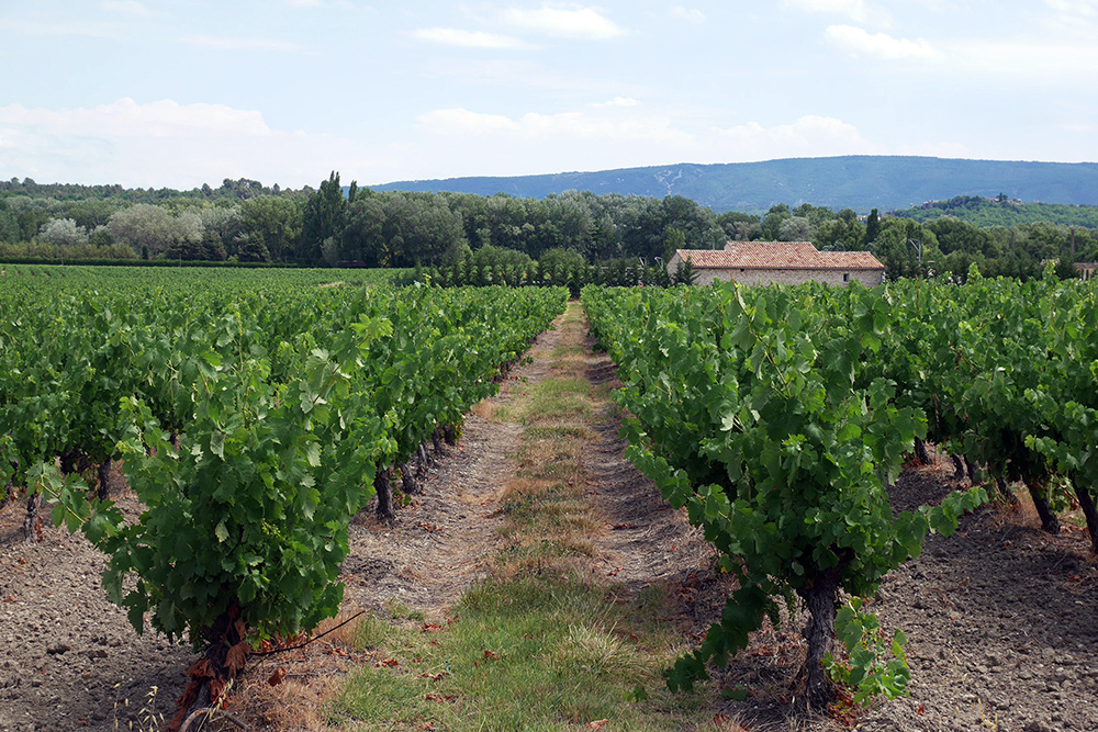 Vineyards in Provence